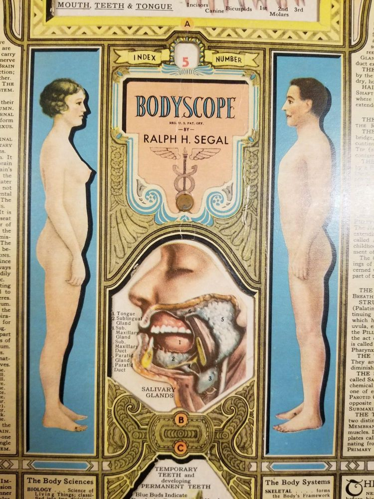 Bodyscope. Ralph H. SEGAL.